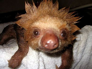 12 of the Cutest Sloths You've Ever Seen! - BATH TIME - Exotic Animals & Pets, Pet Photo Special : People.com