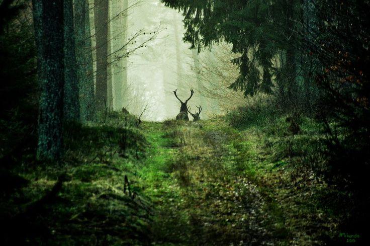 Puszcza Napiwodzko-Ramucka (Napiwodzko-Ramucka Forest - Poland)
