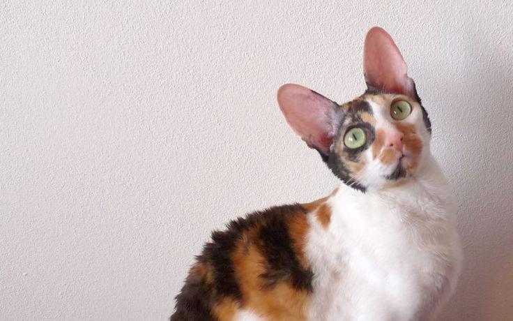 Suche karmy dla kotów kontra mokre karmy dla kotów