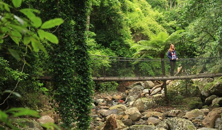 Ideal for walking with children, the beautiful Rainforest loop walk takes an hour to complete. It's located within Minnamurra Rainforest Centre in Budderoo National Park.