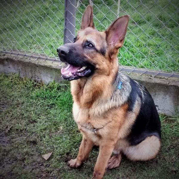 Comandos básicos para cachorros. Adestrar um cachorro representa mais do que ensinar um par de truques que nos fazem rir, uma vez que a educação estimula a mente do cachorro e facilita a convivência...