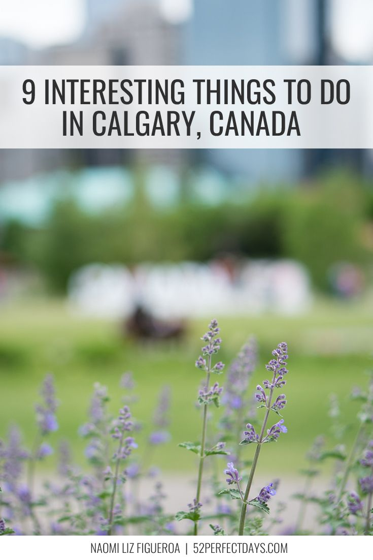 Canada travel tips | best things to do in Calgary | Travel Alberta | city bike paths | Indigenous tourism | hotels in Calgary, Alberta via @52perfectdays @roamtheamericas  @tourismcalgary #capturecalgary #canada150