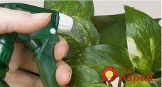 Požívame ju takmer každý deň, no mnohí z nás netušia, aká prínosná je pre rastliny v byte aj v záhrade.