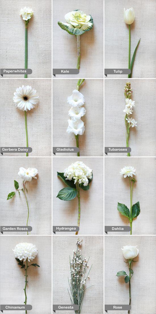 www.weddbook.com everything about wedding ♥ White Wedding Flowers #wedding #white #flower