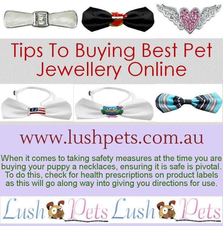 Discover the best pet jewellery online at Lushpets Australia. We have a great range of glamorous pet jewellery for your treasured pet. Visit today at http://www.lushpets.com.au/pet-jewellery