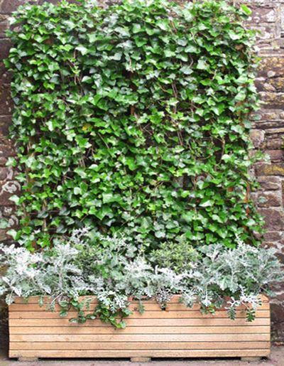 Best 25 Trough Planters Ideas On Pinterest