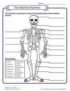 skeletal system quiz classroom science social studies