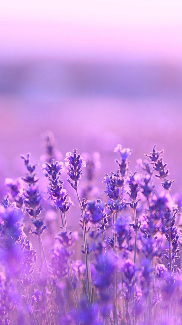 Dark purple aesthetic, lavender aesthetic, aesthetic colors, flower aesthetic,. ورود بنفسجية ،طمس | Nature photography flowers, Purple