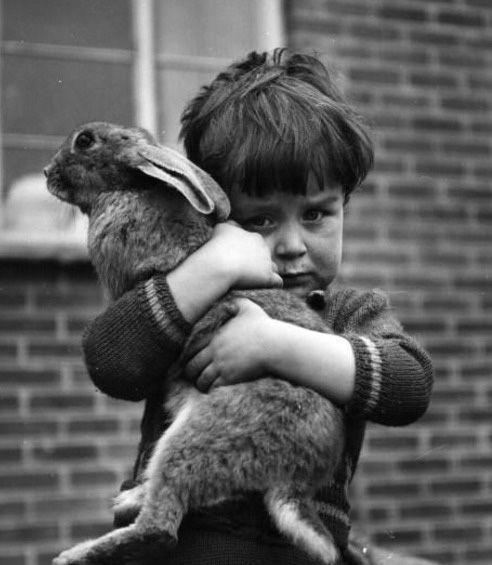 hug a bunny: Rabbit, Pet, Children, Childhood Kingdom, Bunnies, Photo, Little Boys, Animal, Kid