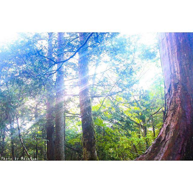 【gai_official】さんのInstagramをピンしています。 《・ ・ 「光×森」 @富士樹海 この夏の写真見返してたらぼちぼちな写真発見!笑 光との感じが個人的に好きやったり ・ ・ #富士樹海 #振り返り #一眼レフ #カメラ #写真 #森 #光 #ファインダー越しの世界 #ファインダー越しの私の世界 #カメラ好きな人と繋がりたい #写真好きな人と繋がりたい #PhotobyMasafumi》
