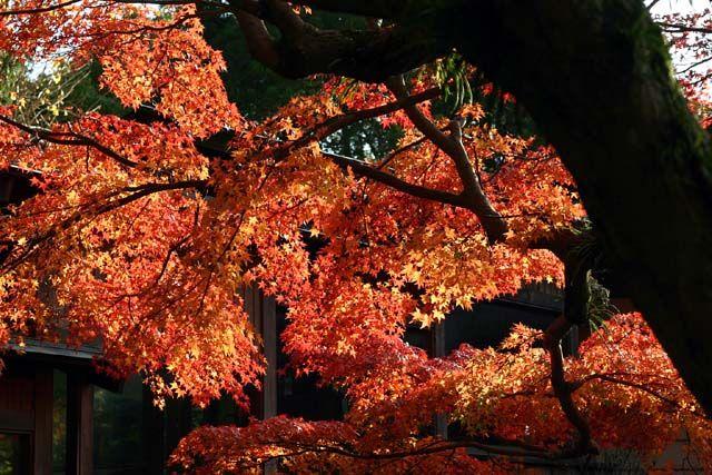 鎌倉宮 2003年12月7日撮影