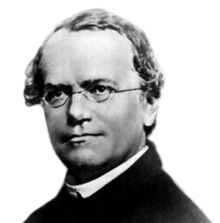 Gregor Johann Mendel (1822 – 1884) was a German-speaking Silesian scientist and Augustinian friar who gained posthumous fame as the founder of the modern science of genetics. Though farmers had known for centuries that crossbreeding of animals and plants could favor certain desirable traits, Mendel's pea plant experiments conducted between 1856 and 1863 established many of the rules of heredity, now referred to as the laws of Mendelian inheritance.