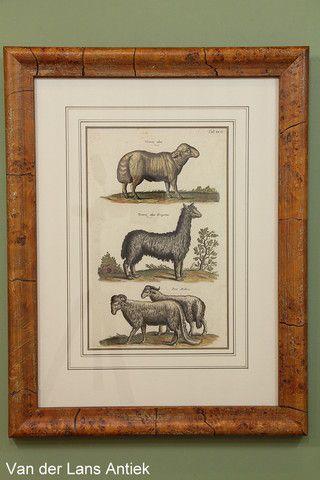 Antieke gravure door Johnston 26367 bij Van der Lans Antiek op www.lansantiek.com.