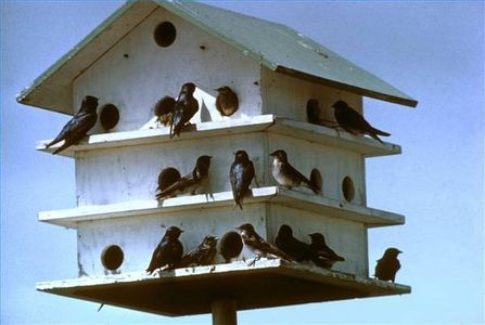 How to Make a Purple Martin Birdhouse thumbnail