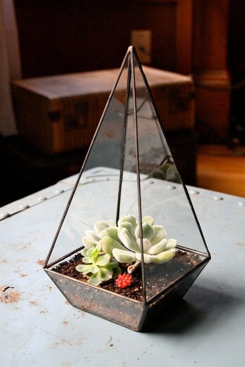 pyramid terrarium - wonder how hard it would be to DIY with thin glass and silicone?