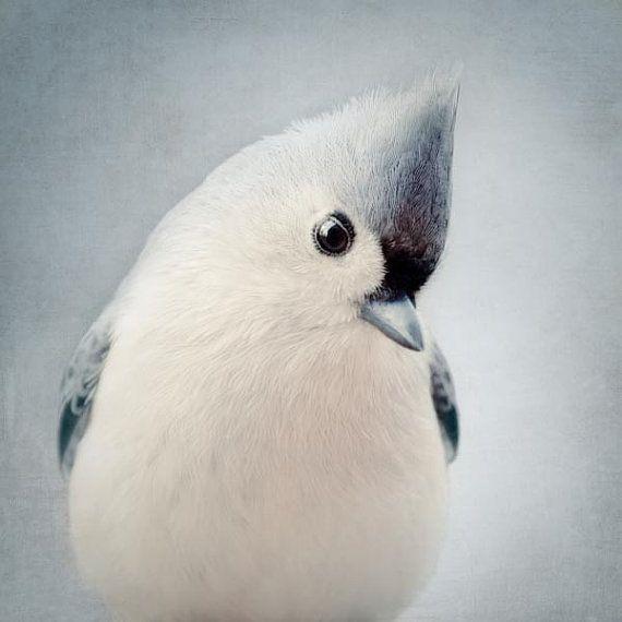 Bird Photography, Nursery Art, Cute Animal Photography, Wall Art, Blue Grey Art, Nursery Bird Print, Dusk Blue, Tufted Titmouse No. 6