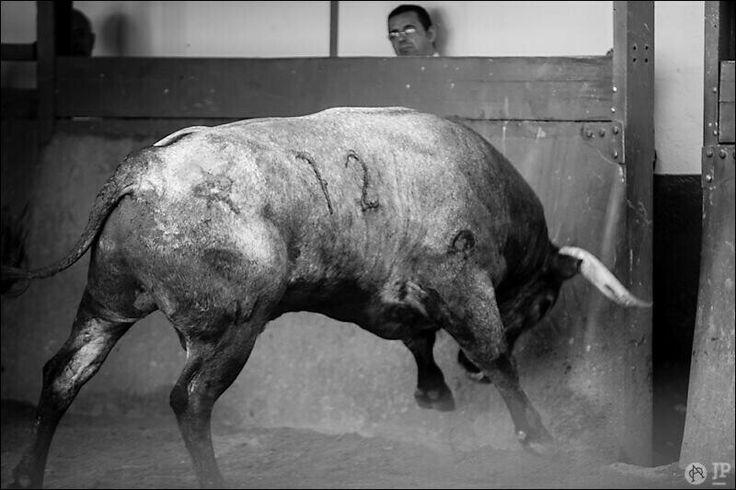 Su majestad el toro