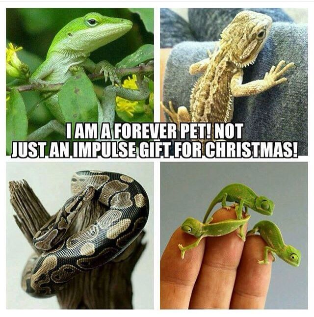 PLEASE TAKE THIS SERIUOUSLY EVERYONE, REPTILES ARE COMPLICATED CREATURES!