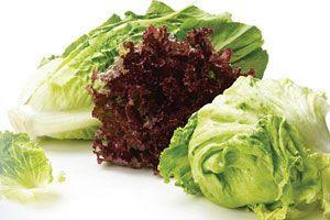 Rouleaux de salade Boston