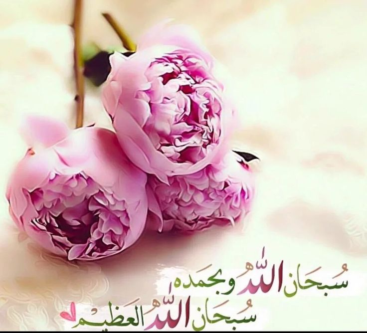 DesertRose,;,سبحان الله وبحمده ،،، سبحان الله العظيم,;,
