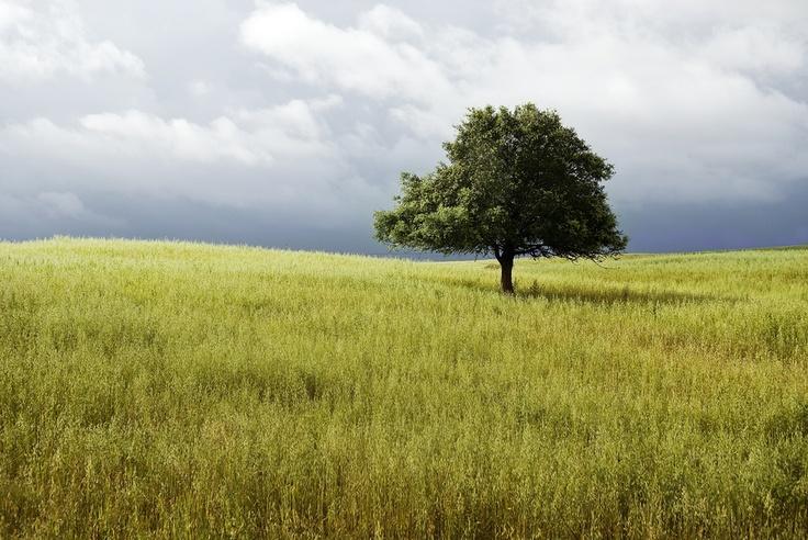 Landscape_03 by Pedro  Pinho, via 500px