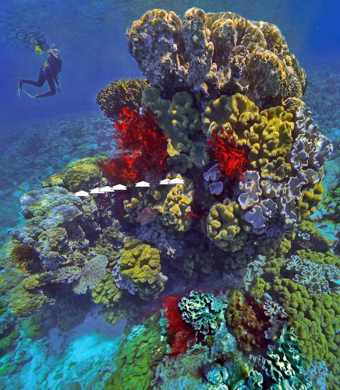 Red and Yellow Octocorals at Ilot Kouare New Caledonia by Richard Chesher https://www.360cities.net/image/octocoral-bouquet-kouare-new-caledonia#-354.79,29.55,110.0