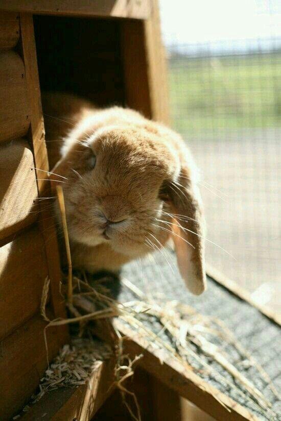 f1f690e510d3ba735e508fbb969cd140--bunny-hutch-peek-a-boos.jpg
