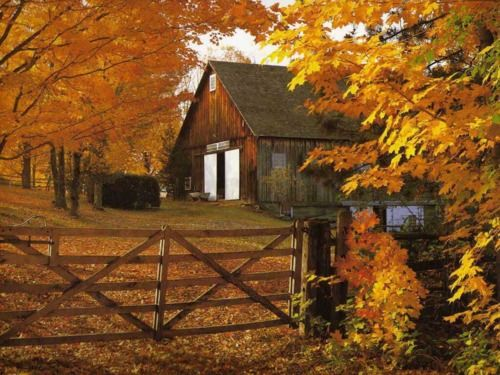 ♥Fall Leaves, Autumn Pictures, Autumnleaves, Nature Pictures, Autumn Leaves, The Farms, Desktop Wallpapers, Old Barns, Country Barns