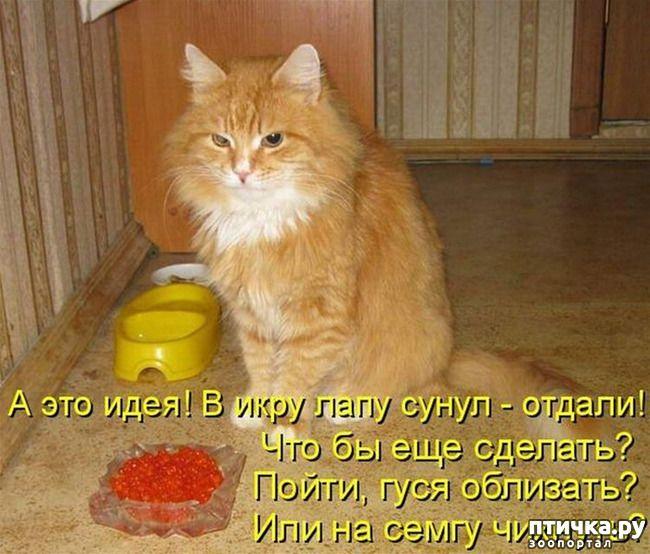 Фотки кошек с надписями