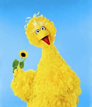 I love Big Bird!!! Don't let ANY presidential candidate EVEN SUGGEST cutting funding to PBS and Big Bird!!! Leave him alone!!!!!!!!!!!!!!!
