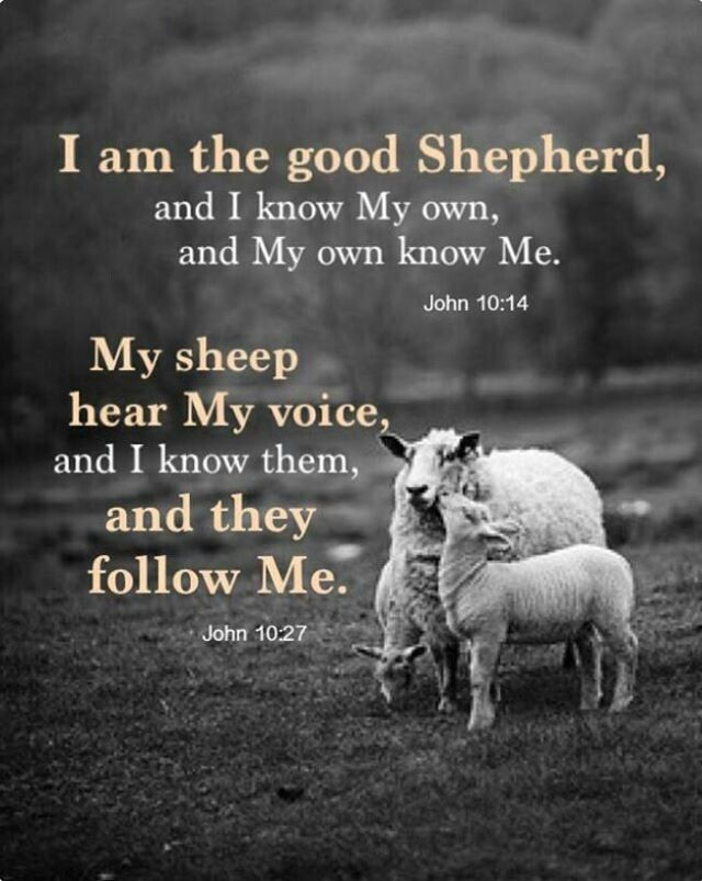 [Jesus said]  My sheep listen to my voice; I know them, and they follow me. - John 10:27 (NIV Bible)