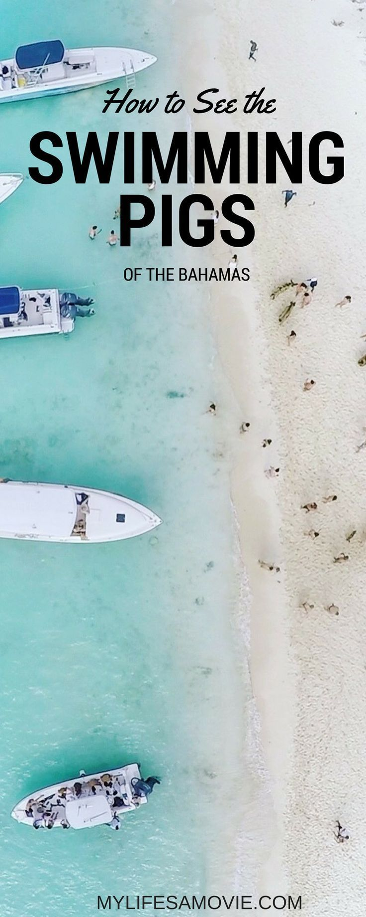 How to See the Swimming Pigs of the Bahamas! A full guide to getting to the Exumas and Staniel Cay, where to stay, and how to get to the adorable Swimming Pigs!