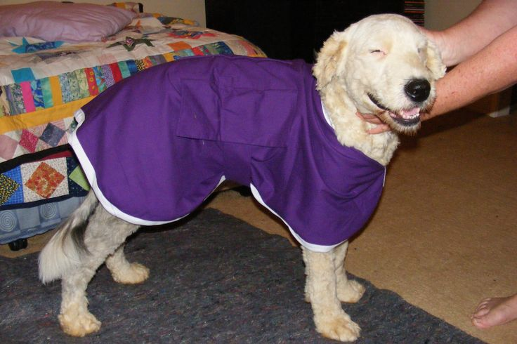 Just made a new coat for neighbours Red setter had to try it on?