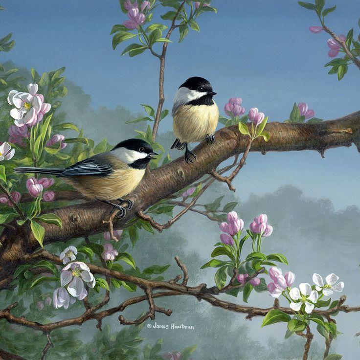 Открытки птица на ветке, расстоянии картинки