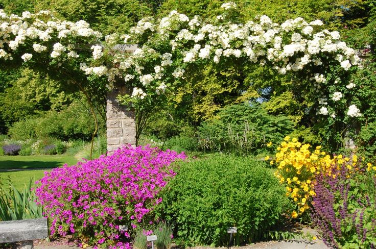 visbys botaniska trädgård - Sök på Google