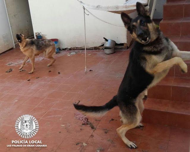 Una mujer atacada por su propio perro llama a la Policía Local de Las Palmas de Gran Canaria