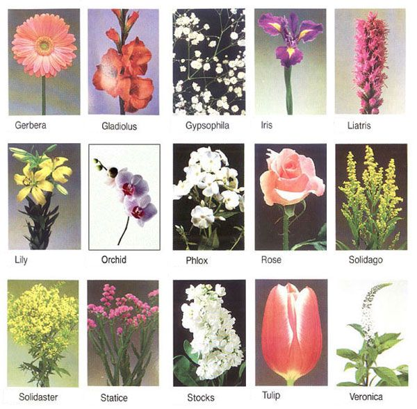 pictures of flower names google search - Common Flowers In Arrangements