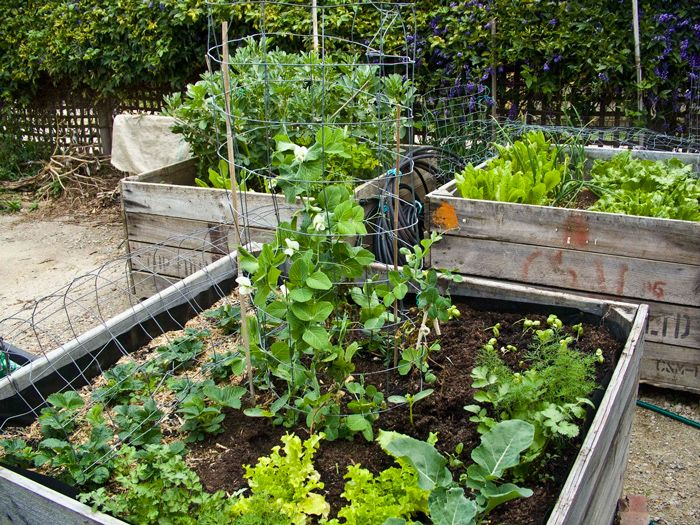 apple crate sml gardening raised beds pinterest