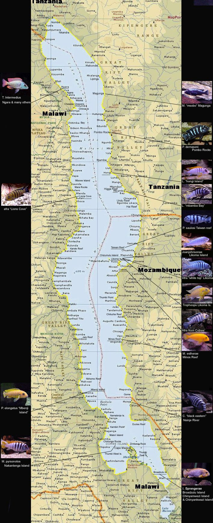 My Victorian Cichlids Lake Victoria Map & Links My Malawi Cichlids My Riverine Cichlids My Current Stocklist Spawning Home