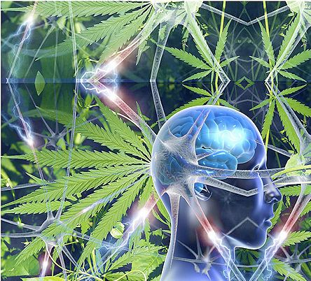 One by one – the irrational lies of the prohibition set are slowly being put to down like rabid animals. Even within the stubborn old guard, cannabis as medicine is continually finding new allies. Example: a new report offered by the Journal Neurochemistry International has discovered that marijuana's CBC cannabinoid helps to promote brain cell growth.  http://www.marijuana.com/news/2013/08/new-research-cbc-cannabinoid-sparks-brain-cell-growth/