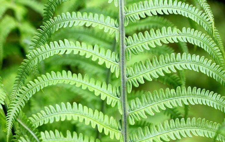 Un dispositivo portátil ayudará a identificar las plantas en tiempo real