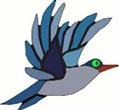 Interesting Information about Birds for kids