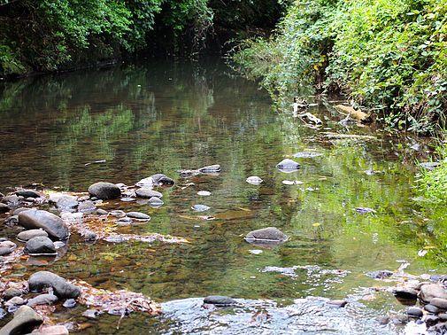 Punehu Stream Cottage, opunake