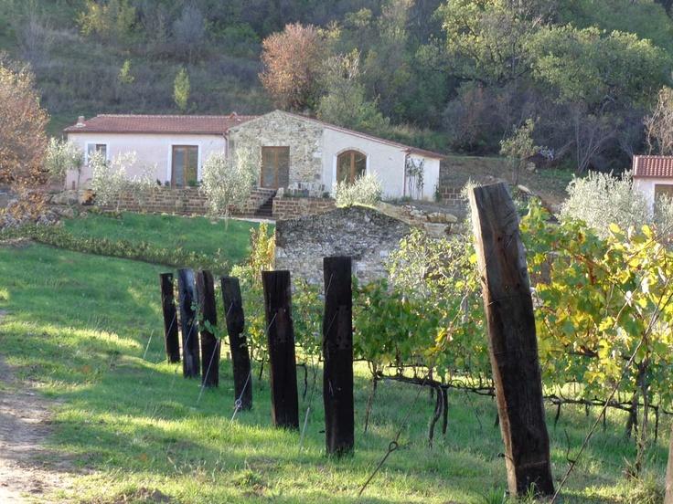 il Borghetto - il Casaletto and the wineyard