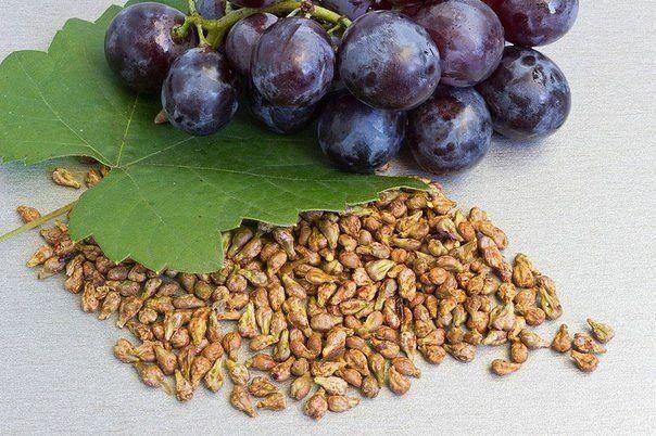 Съедая ягоды и фрукты, мы, как правило, косточки выбрасываем. И зря. Оказывается, косточки иногда бывают полезнее, чем сами фрукты и ягоды.