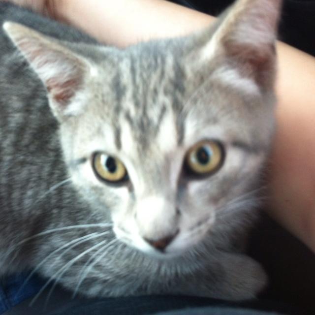 My kitten Schrody