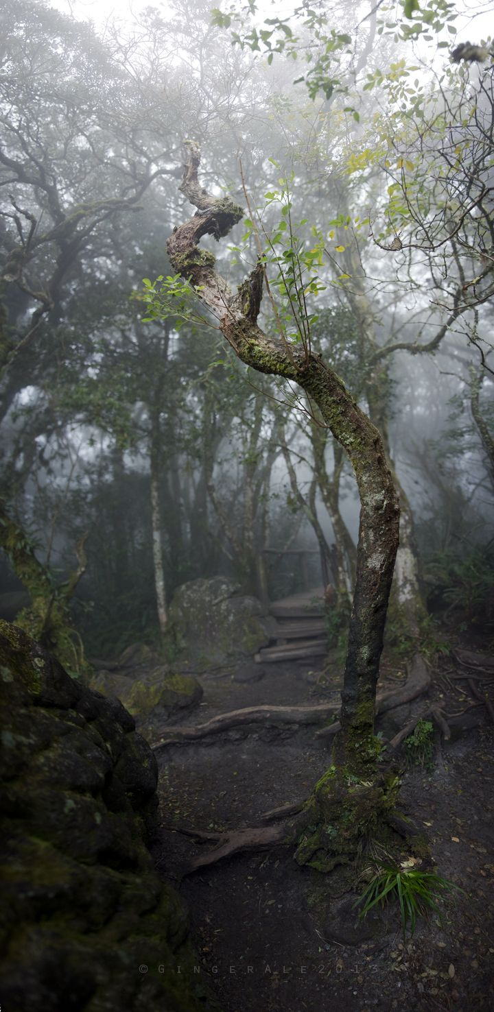 GingerAle Photography, God's Window - Rain Forest, South Africa