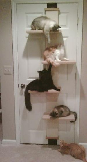 "Behind-Door Cat Tree Saves Space Cats are good pets to have in apartments and condos where space is at a premium, but you might not have room for big ""cat condos"" or climbing trees that sit on the floor. The SmartCat Multi-Level Cat Climber is an alternative option (by the way"
