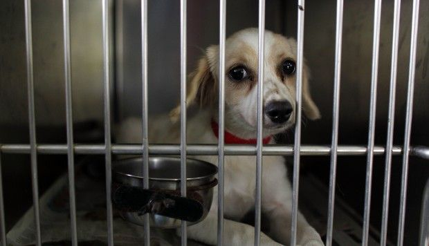 The great puppy airlift: 205 doomed dogs are rescued from death row in Puerto Rico http://cstu.co/fc984e