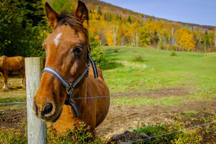 Fine Equine | pierretrowbridge.com